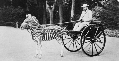 Rothschild again, in his awesome zebra deathcarriage